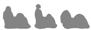 Внутрипородные типы Ши Тцу