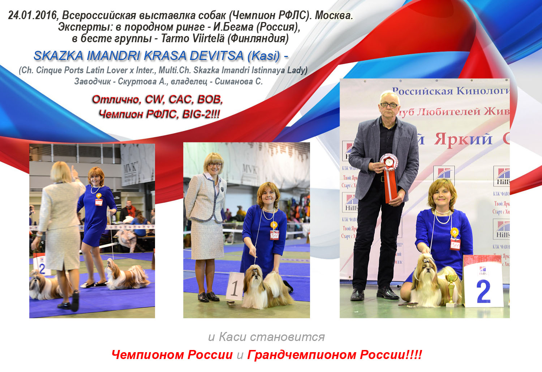 Каси - Чемпион России и Грандчемпион России. Всероссийская выставка, 24 января 2016, Москва