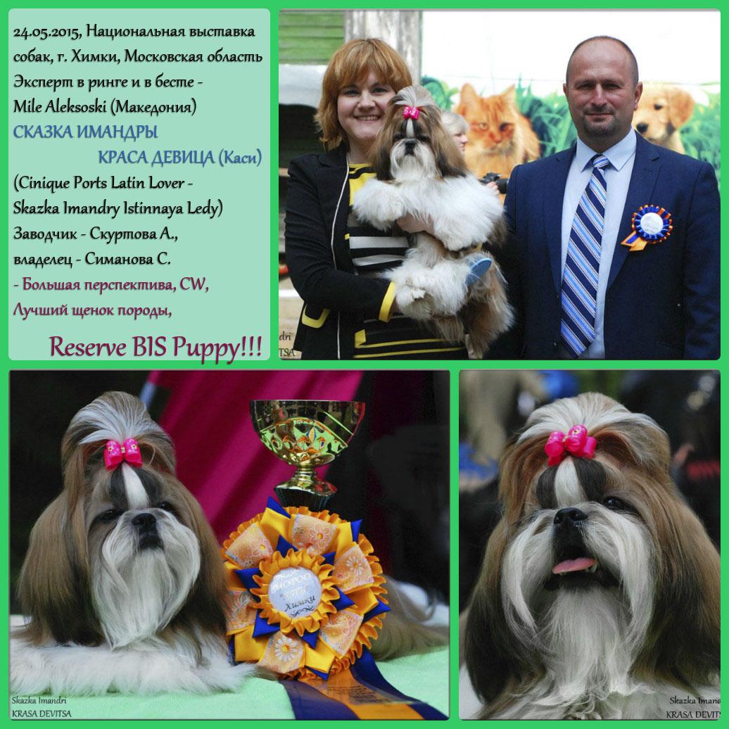 Национальная выставка собак всех пород, г. Химки, Московская область. 24 мая 2015 г.