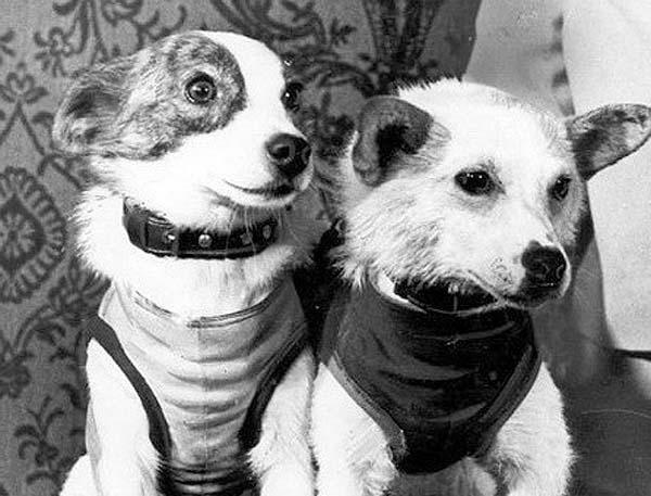 Белка и Стрелка. Самые известные собаки