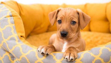 Как ухаживать за собакой. Выбор породы