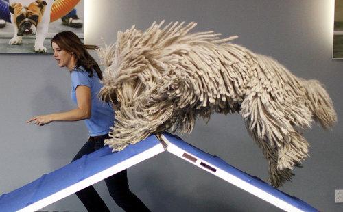 Тренировка собак. Залы для занятий с собаками
