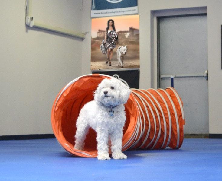 Залы для тренировки собак в Москве и Подмосковье