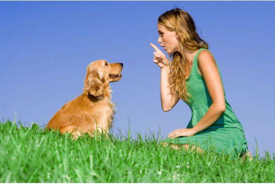 Как ухаживать за собакой. Советы