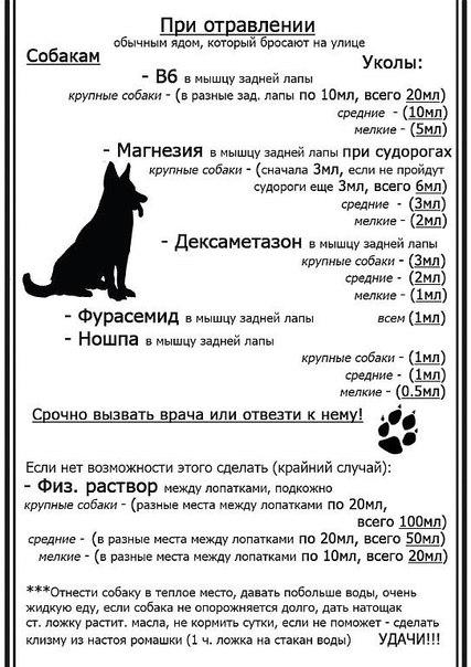 Отравление собак и методы оказания скорой помощи собаке при отравлении