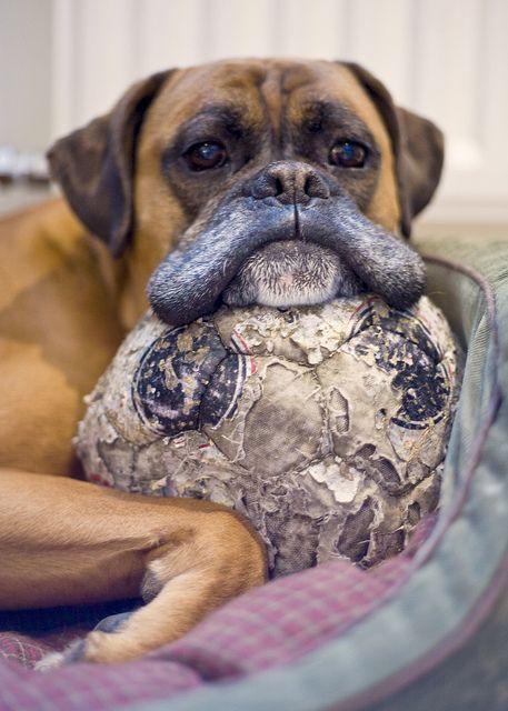 Уход за пожилой собакой. Советы владельцам