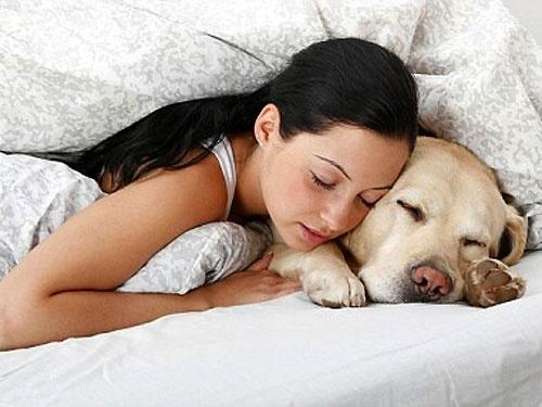 Сонник. К чему снится собака
