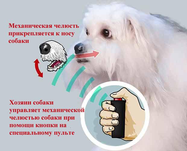 """Принцип управления механической челюстью """"говорящей собаки"""" на шоу талантов в Британии"""