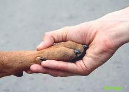 Биополе собаки и человека. Взаимодействие