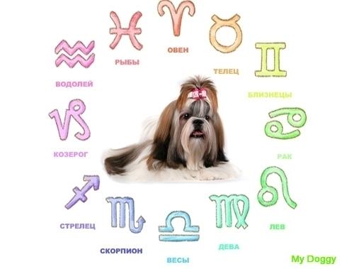 Совместимость знаков зодиака хозяина и собаки