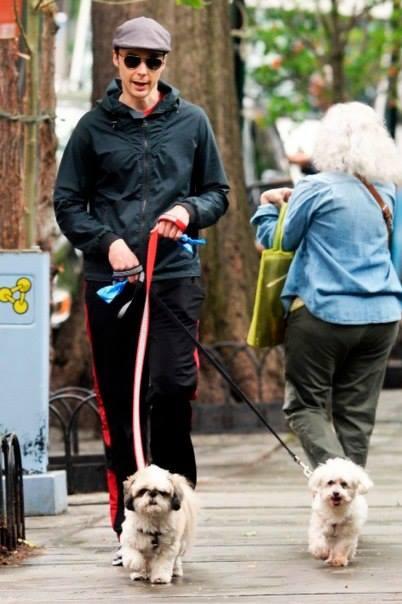 Знаменитости-владельцы Ши Тцу. Jim Parsons на прогулке со своими питомцами, один из которых Ши Тцу