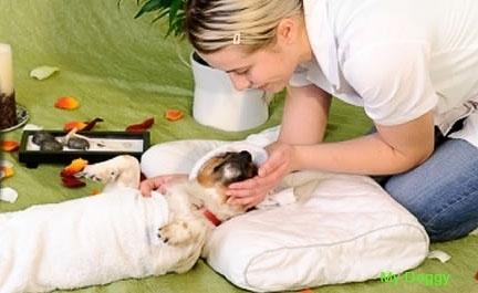 Как сделать массаж для собаки