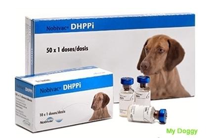 Вакцинация собак. Нобивак