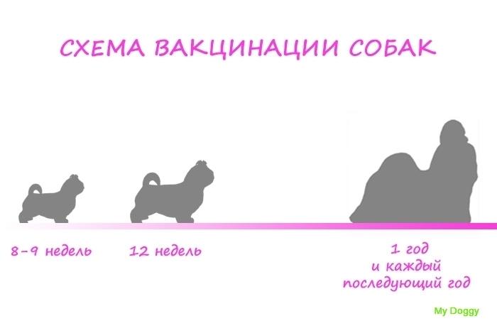 Схемы вакцинации собак