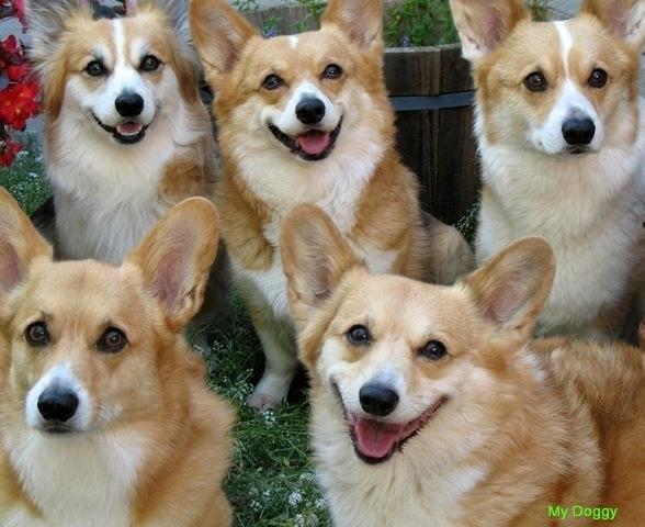 Умеют ли собаки улыбаться