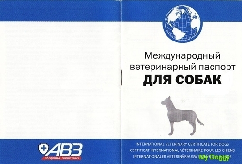 Здоровье собаки. Ветеринарный паспорт