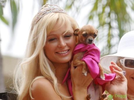 Что расскажет собака о своем хозяине? Пэрис Хилтон и ее чихуахуа