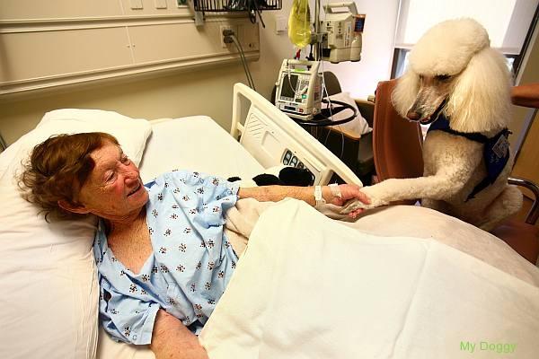 Преимущества в отношении здоровья, которые дает собака