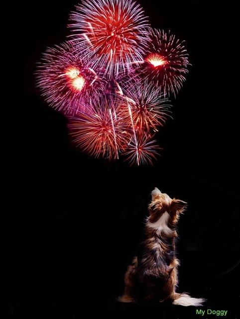 Собака и фейерверки