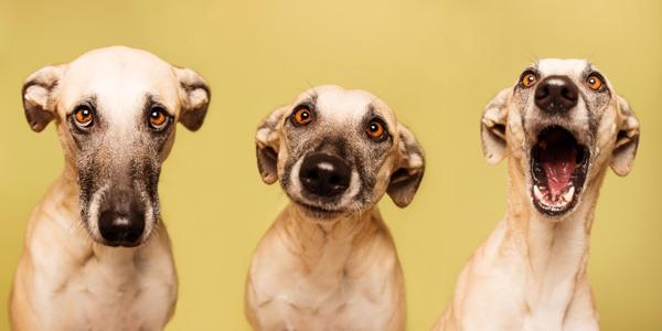 Фотографирование собак. Советы