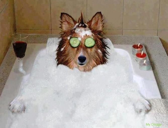 Как приучить собаку купаться?
