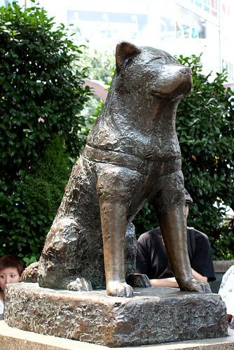 Международный день собак и другие кинологические праздники