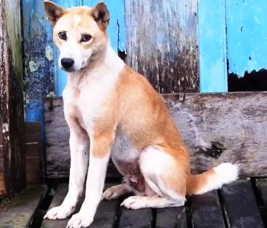 Самые редкие породы собак. Теломиан