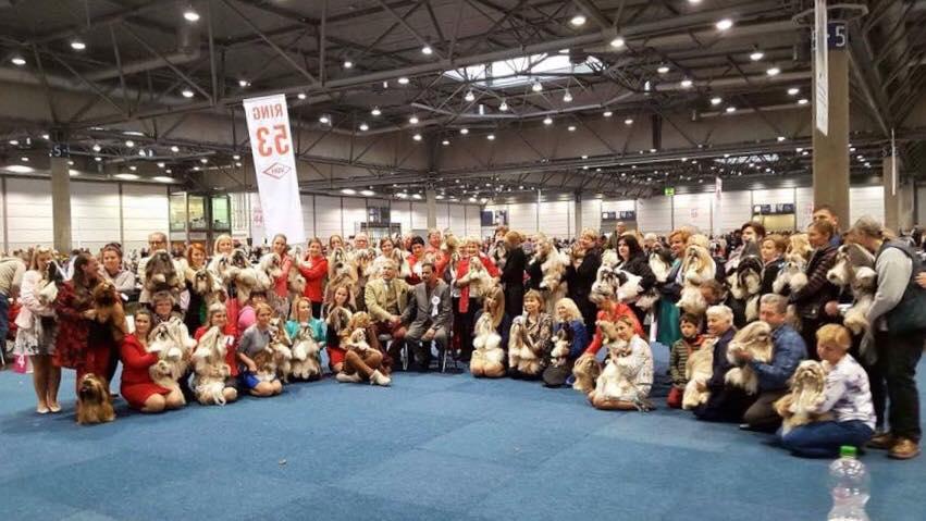 World Dog Show 2017. Shih Tzus. Выставки собак. Чемпионат мира 2017, Лейпциг
