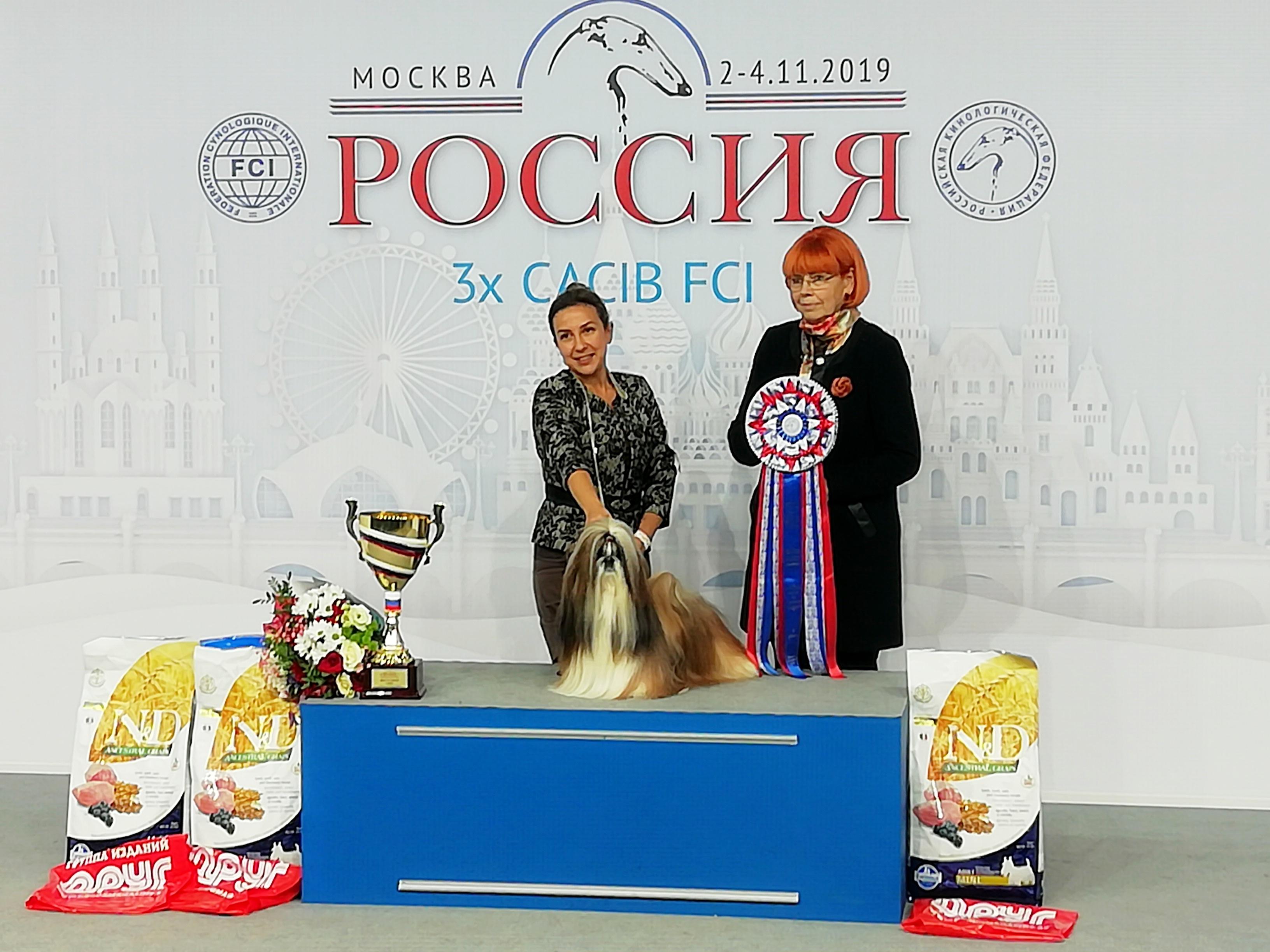 """Выставка """"Россия-2019"""", 02 ноября 2019. BOB, BIG-1 - Shen De Lux Gladiator"""