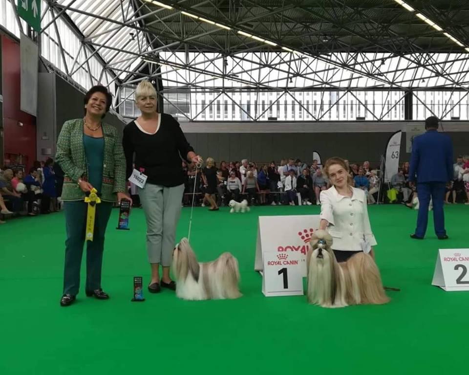Чемпионат Мира 2018 в Амстердаме. Результаты рингов Ши Тцу. CACIB & Res.CACIB
