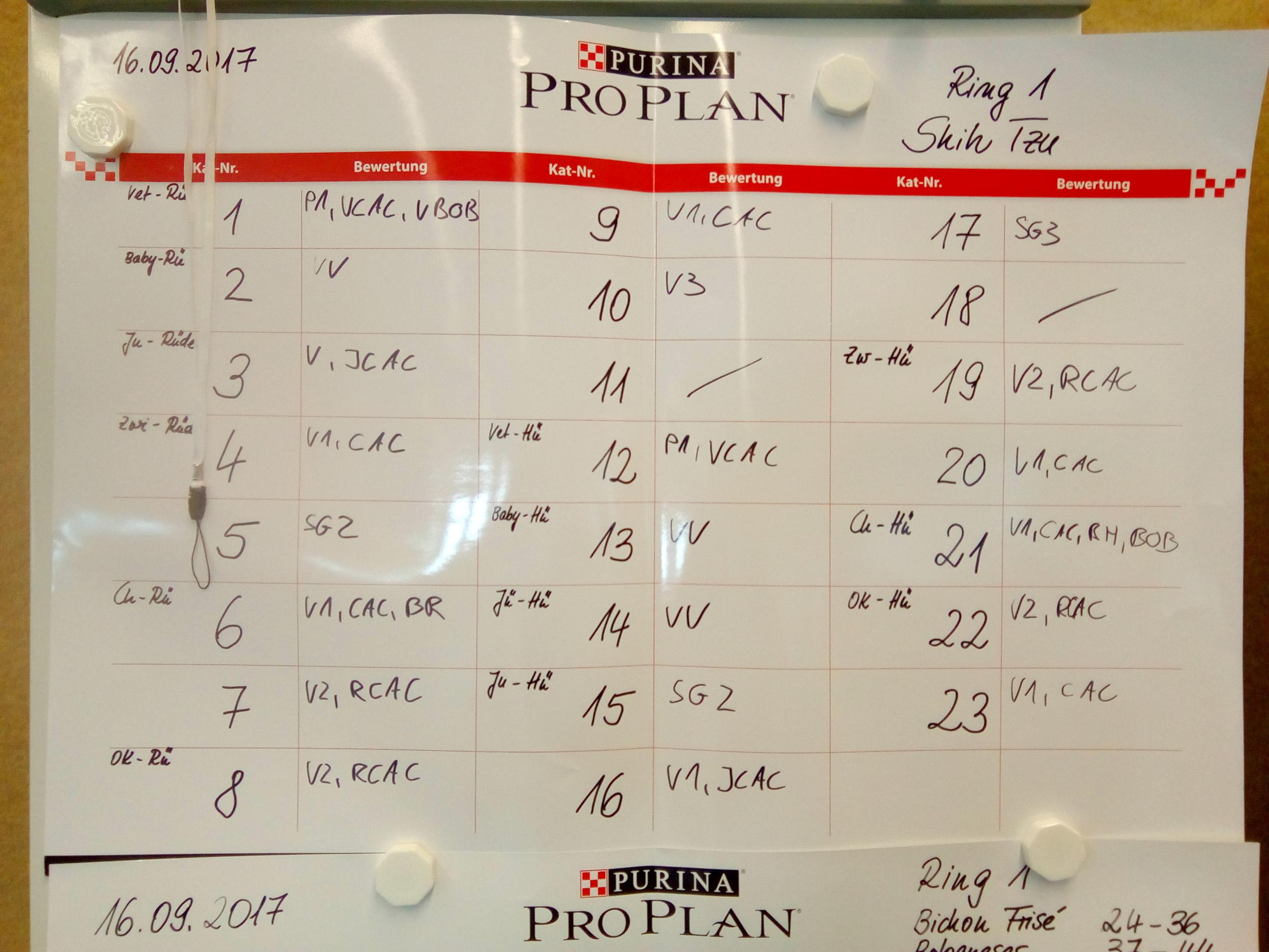 Результаты рингов ши-тцу на клубной выставке в Германии. 16 сентября 2017 г.
