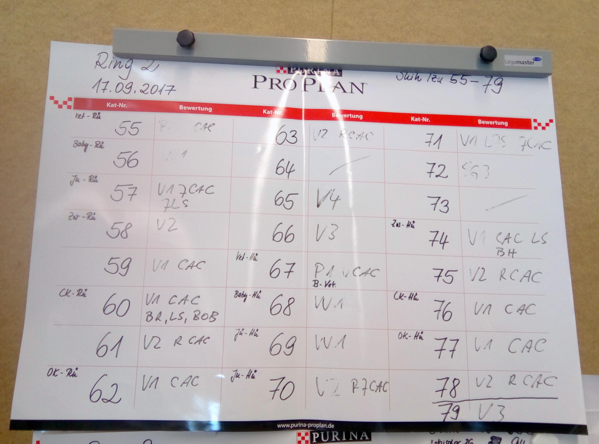 Результаты рингов на клубной выставке в Германии. 17 сентября 2017 г.