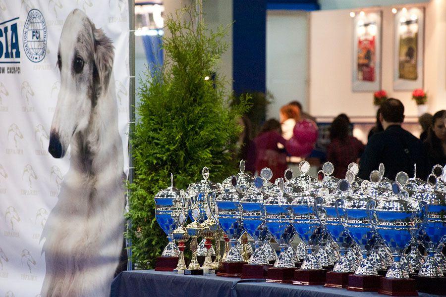 Евразия. Выставка собак. Расписания и эксперты в рингах Ши Тцу