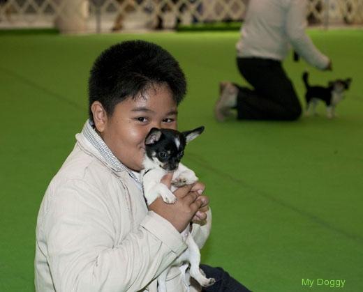 Выставки собак в Таиланде. Праздник