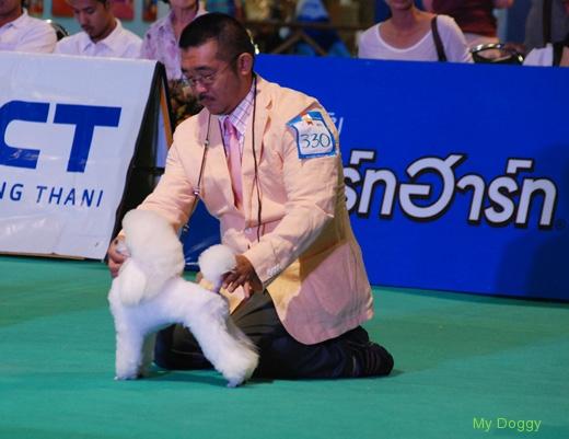 Выставки собак в Таиланде
