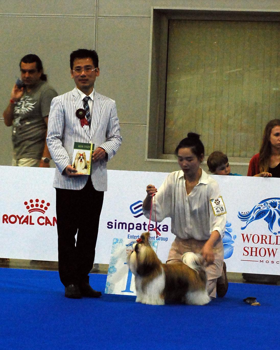 Лучший щенок специализированной выставки ши тцу в рамках WDS'2016