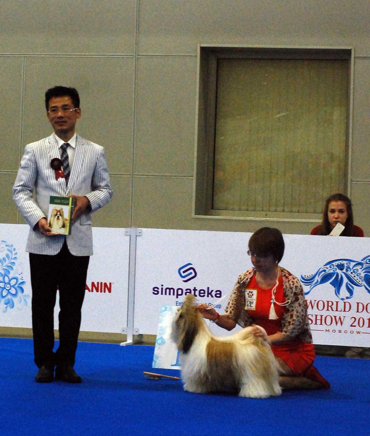 Лучший юниор-кобель на специализированной выставке Ши Тцу в рамках WDS'2016