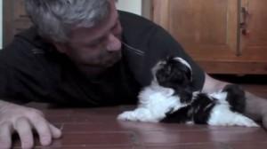 Первая встреча щенка с хозяином