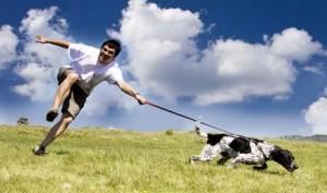 Преимущества для вашего здоровья, если у вас есть собака