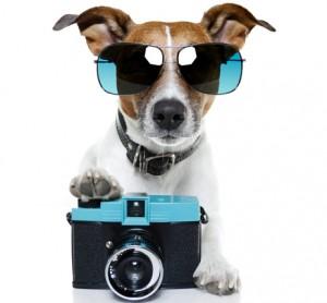 Фотографирование собак