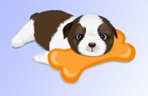 Нужно ли собаке рожать для здоровья?