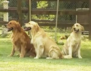 Уход за шерстью собак разных пород