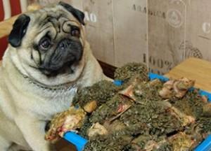 Питательная ценность мяса и субпродуктов в кормлении собак