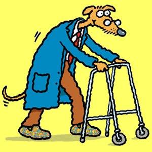 Уход за пожилой собакой. Полезные советы