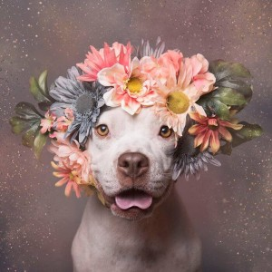 "Проект ""Pit Bull Flower Power"""