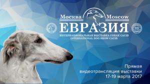"""Международная выставка собак """"Евразия-2017"""". Второй день."""