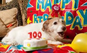 Продолжительность жизни собак. Собака-долгожитель. Сколько лет живут собаки