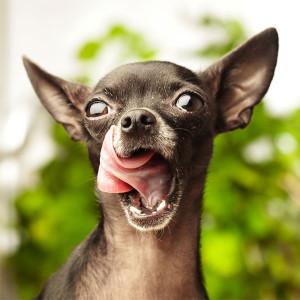 Копрофагия. Или почему ваша собака ест фекалии