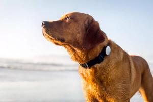 Как найти собаку и не сесть в тюрьму. GPS трекер ошейник