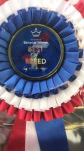 Benelux Winner 2018. Ринги Ши-тцу